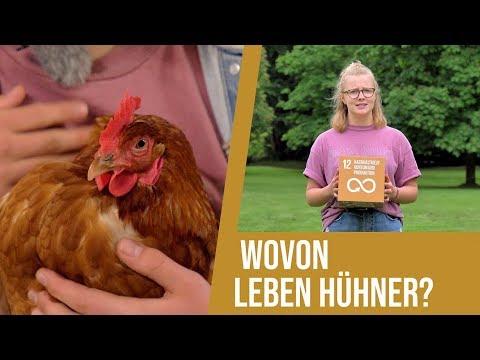 Mathilda fragt nach(haltig): Was essen Hühner, die wir essen?