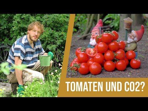 Johann fragt nach(haltig): Tomaten und CO2?