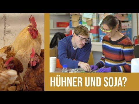 Johann fragt nach(haltig): Hühner und Soja?