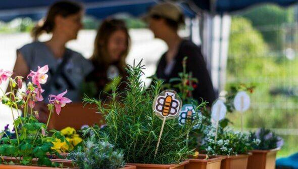 Frühjahrspflanzaktion Bienenkübel. Projekte zur Begrünung Speyers und zur Förderung der Biodiversität gehören zu den Initiativen von inSPEYERed e.V. Foto: © inSPEYERed